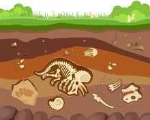 Soil Ground Layers With Buried Fossil Animals, Dinosaur, Crustaceans And Bones. Vector Flat Style Cartoon Illustration
