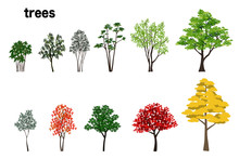 樹木数種のイラスト