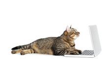 Beautiful Cat With Laptop Computer Lying On White Background