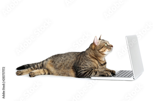 Beautiful cat with laptop computer lying on white background Fotobehang