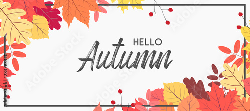 Obraz Hello autumn falling leaves. Autumnal foliage fall and poplar leaves. Autumn design. Templates for placards, banners, flyers, presentations, reports. - fototapety do salonu