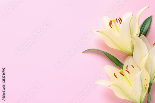 Beautiful lilies on pink background, flat lay. Space for text Fototapet