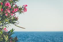 "Sea Panorama And Flower Called ""Oleander"", Latin Name ""Nerium Oleander"""