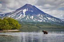 Kamchatka Brown Bear Hunting I...