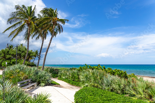 South Florida coastal palm trees and beach