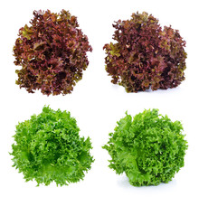 Fresh Green Lettuce And Red Lettuce Leafs Isolated On White Background
