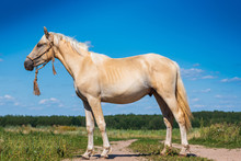 Portrait Of A Horse In Full Gr...