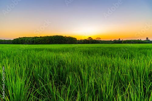 Foto auf Gartenposter Landschappen Rice field with color of sky in twilight
