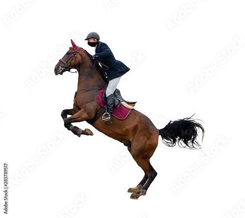 Fotografia horse racing jumping jockey isolated on white background