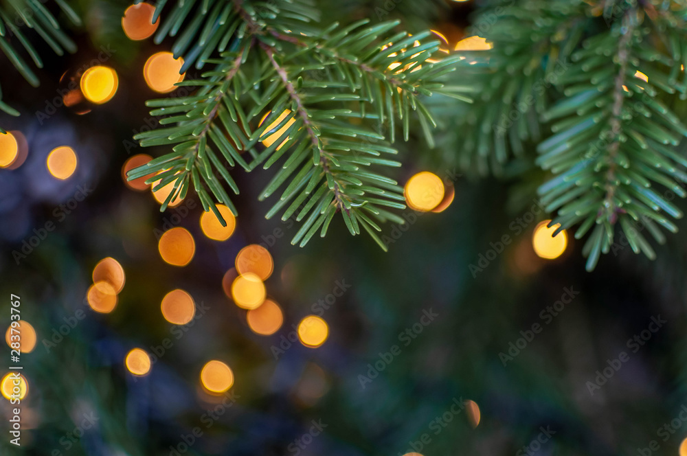 Fototapety, obrazy: Christmas tree close-up with colorful lights on a background. Shallow depth of field.