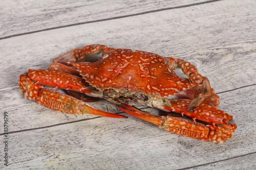 Obraz na plátně  Boiled crab - ready for eat