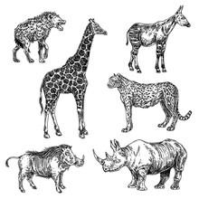 Set Of African Animals. Giraffe, Okapi, Warthog, Hyena, Rhino, Cheetah. Sketch. Engraving Atyle. Vector Illustration.