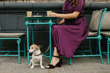 City Coffee With Pet. Elegant ...