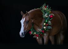 Christmas Horse II