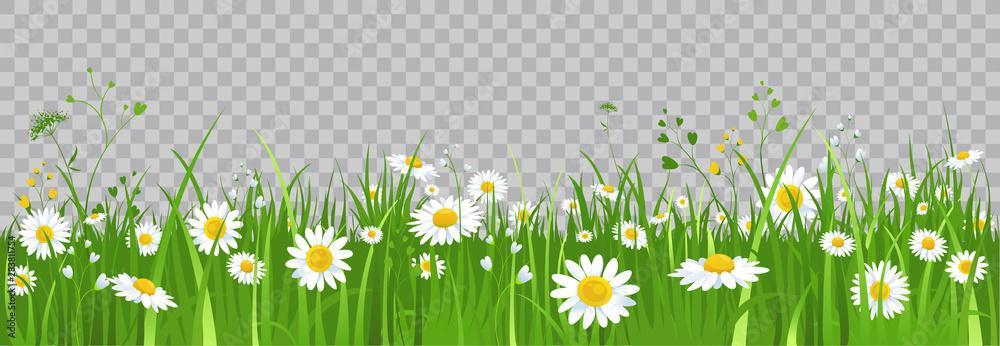 Fototapeta Flowers and green grass.