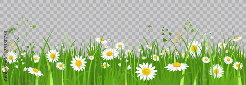 Photo Flowers and green grass.