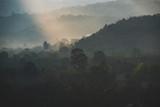 Fototapeta Na ścianę - deep tropical rain forest, Thailand