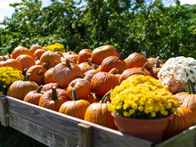 Pumpkins And Flowers In A Wagon