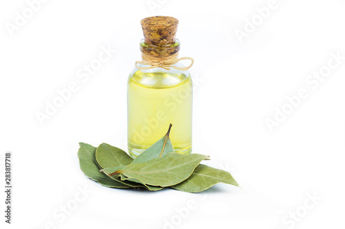Fototapeta glass bottle of essential bay laurel oil with daphne leaves isolated on white background