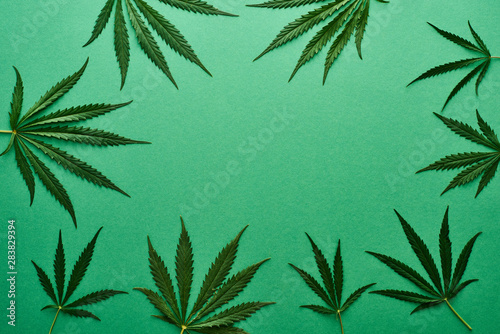 Fényképezés top view of green cannabis leaves on green background with copy space