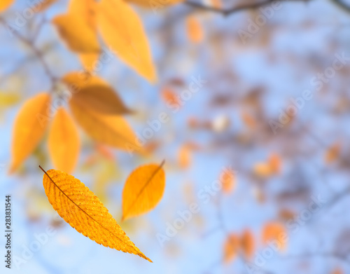 obraz lub plakat Autumn leaves