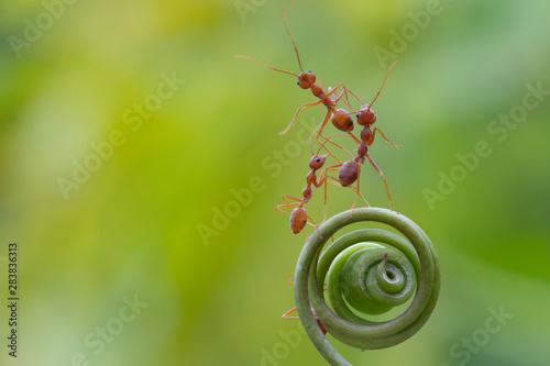 Ant action standing Wallpaper Mural