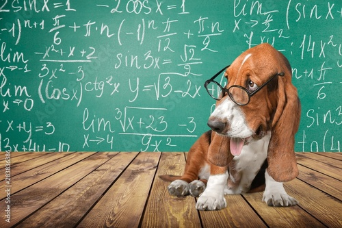 mata magnetyczna Math dog crazy glasses academic animal blackboard
