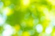 Leinwanddruck Bild - natural green background with selective focus