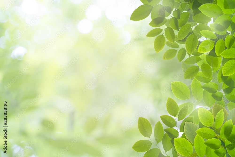 Fototapety, obrazy: Close up nature frame of green leaf isolate on white background in garden with copy space using for background concept natural green plants landscape, ecology, fresh wallpaper