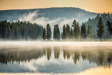 Pine Trees Reflect On Misty Yellowstone River - 1