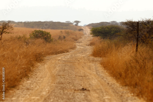 Safari dirt road