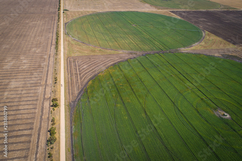 obraz lub plakat irrigation circles of crops