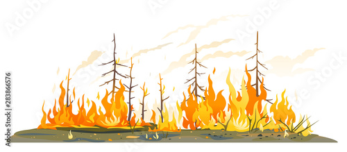 Fotografia  Burning forest spruces in fire flames isolated, nature disaster concept illustra