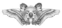 Portrait Of Koala With Wings. Hand-drawn Illustration.