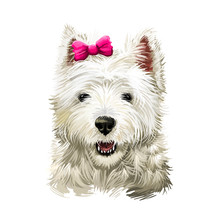 Cairn Terrier Dog Breed Isolat...