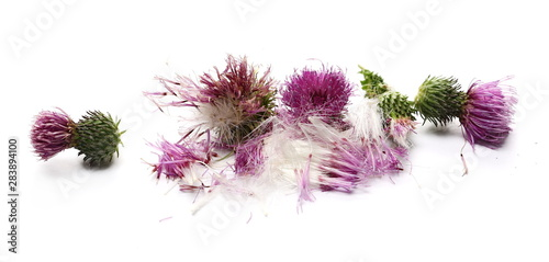 Stampa su Tela Fresh herbaceous plant, arctium burdock, flower petals and seeds isolated on whi