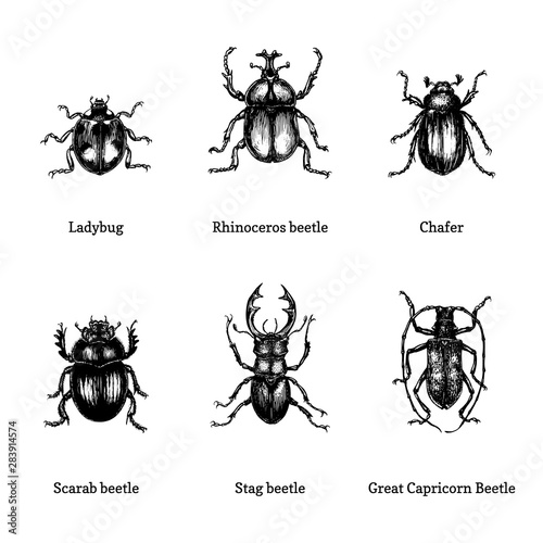 Valokuva Illustration of beetles on white background