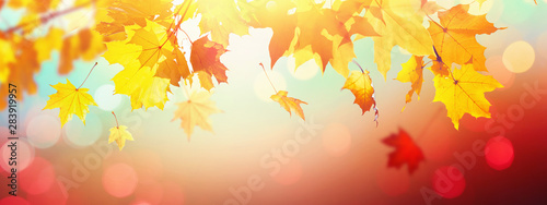 Falling Autumn Maple Leaves Natural Background Fotobehang