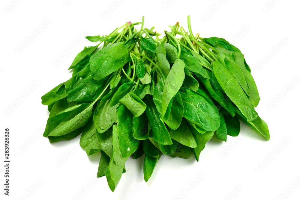 Fototapety, obrazy: Fresh spinach leaves as background.