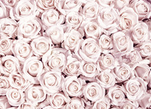 Background From Small Rosebuds...