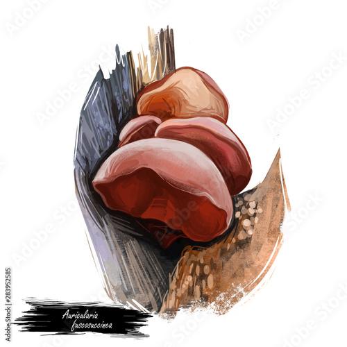 Photo Auricularia fuscosuccinea mushroom closeup digital art illustration