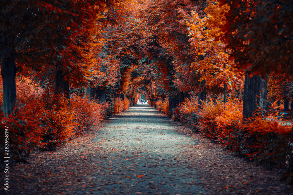 Fototapety, obrazy: autumn alley .tree alley in the park in autumn time