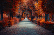 canvas print picture - autumn alley .tree alley in the park in autumn time
