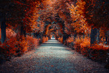 Fototapeta Fototapety z naturą - autumn alley .tree alley in the park in autumn time