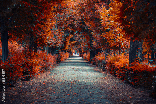 Obraz autumn alley .tree alley in the park in autumn time  - fototapety do salonu