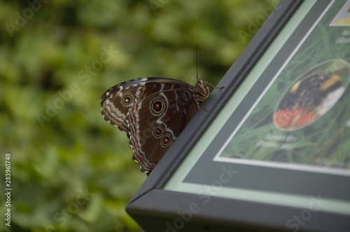 Butterfly on sign