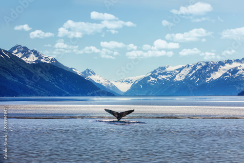 Humpback whale tail with icy mountains backdrop Alaska Canvas-taulu