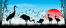 Japanese Cranes In The Wild. Birds Cranes On Sunrise Background. Morning, Sky, Sun. Birds On A Background Of Grass, Bamboo And Reeds. Evening Landscape. Wildlife Scene