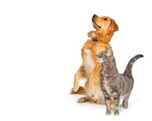 Excited Dog And Cat Together Looking Up And Side
