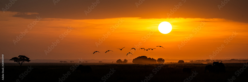 Fototapeta Golden African Sunset With Flock of Birds